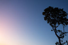 Abstract tree at twilight evening Stock Photo