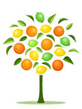 Abstract tree with various citrus fruits. Abstract tree with oranges, lemons, limes and leaves on a white background stock illustration