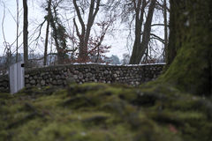 Abstract Tree Wall Stock Photos