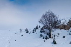 Abstract tree in Winter Royalty Free Stock Photography