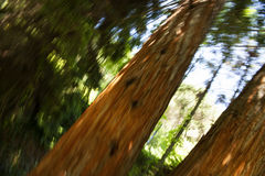 Abstract Trees Royalty Free Stock Images