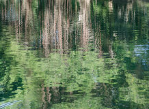 Abstract trees reflection on water Stock Images
