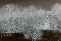 Abstract Trees and Shrubs Royalty Free Stock Photography