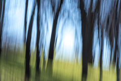 Abstract of trees and sky with blur Royalty Free Stock Image