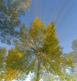 Abstract Trees Stock Photos