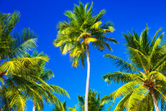 Abstract tropical background Stock Photography