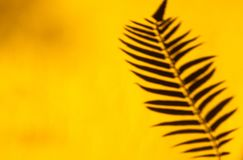 Abstract tropical background of palm leaf shadow against yellow background. Summer flat lay stock photos
