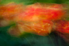 Abstract Tulips in Motion2 Royalty Free Stock Photos