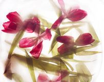 Abstract tulpenboeket Stock Foto