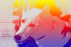 Abstract typography portrait of a siberian husky royalty free stock photo