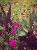 Abstract uitstekend beeld van bloemen op het weidegebied Stock Foto's