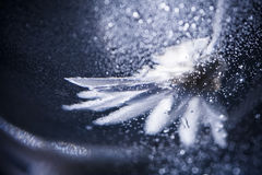 Abstract underwater composition with dried flower, bubbles and light Stock Photos