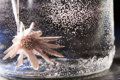 Abstract underwater composition with dried flower, bubbles and light Royalty Free Stock Photos