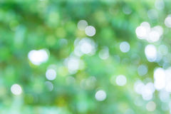 Abstract unfocused green nature forrest background Stock Photos
