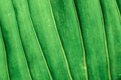 Abstract van de achtergrond bladerentextuur tropisch groen aardpatroon Stock Afbeeldingen