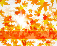 Abstract vector autumn background Royalty Free Stock Images