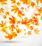 Abstract vector autumn background Stock Image