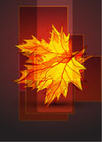 Abstract vector autumn background Stock Photography