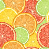 Abstract vector color background with citrus fruit Royalty Free Stock Images