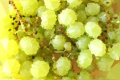 Abstract vector illustration. Green grapes. A mosaic of small triangle pieces Royalty Free Stock Photography