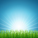 Abstract vector rising sun over green grass background Royalty Free Stock Photo