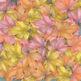 Autumn leaves background. Abstract vector season background with autumn maple leaves stock illustration