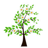 Abstract Vector spring tree illustration. Stock Images