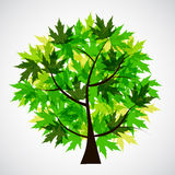Abstract Vector spring tree illustration Royalty Free Stock Photos