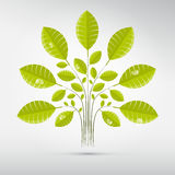 Abstract Vector Tree, Bush with Green Leaves Royalty Free Stock Photography