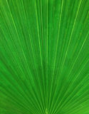 Abstract vertical palm leaf pattern, background Royalty Free Stock Photo