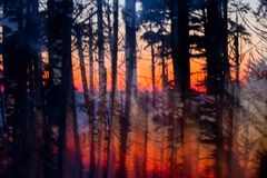 Abstract, vertical panning shot of forest at sunset. A glorious pink, orange and red sky after sunset over the ocean provides a brightly coloured background for stock photo