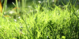 Abstract view of green grass Stock Images