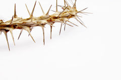 Free Abstract View Of Branch Covered In Thorns Royalty Free Stock Image - 35583066
