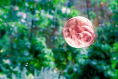 One brown soap bubble. Stock Photography