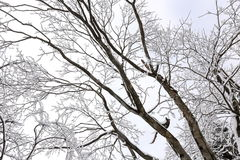 Abstract View of Winter. Scene of Winter with White Snow Covering Most Part of Tree Royalty Free Stock Images