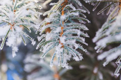 Abstract View of Winter Snow on Tree Branches Stock Image