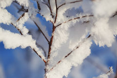 Abstract View of Winter Snow on Tree Branches Stock Photography