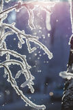 Abstract View of Winter Snow on Tree Branches Stock Photos