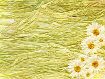 Abstract vintage floral background with daisies and straw. Made with color filters, watercolor composition Stock Photo
