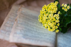 Abstract vintage grunge music background yellow flowers on yellowed old music book with worn paper. Concept of romantic Stock Photo