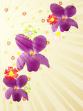 Abstract Viola background Stock Image