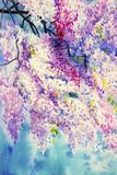 Abstract Violet color of Wisteria flowers. Royalty Free Stock Photos