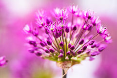 Abstract Violet Flowers Stock Photography