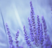 Abstract violet flowers Stock Photo