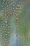 Abstract water drops background. Shallow DOF Stock Photo
