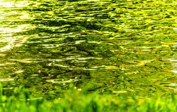 Abstract water fine art. With greens and yellows reflecting on water ripples Royalty Free Stock Images