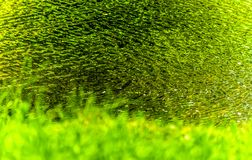 Abstract water fine art. With greens and yellows reflecting on water ripples Royalty Free Stock Image