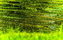 Abstract water fine art. With greens and yellows reflecting on water ripples Royalty Free Stock Photo