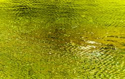 Abstract water fine art. With greens and yellows reflecting on water ripples Stock Images