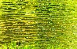 Abstract water fine art. With greens and yellows reflecting on water ripples Royalty Free Stock Photography